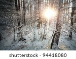 Winter Deciduous Forest With...