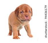 First Steps Of Dogue De...
