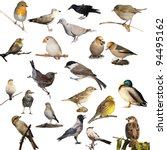 Set Of Photographs Of Birds...