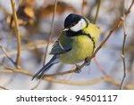 little cute blue tit sitting on ... | Shutterstock . vector #94501117