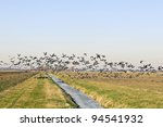 geese flying up from winter  farmland - stock photo