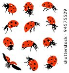 Collection of ladybirds - stock vector