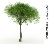 3d render willow tree isolated...   Shutterstock . vector #94628623
