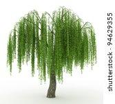 3d Render Weeping Willow...