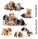 Stock photo group of cats and dogs in front of white background 94693804