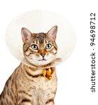 Bengal Cat Looking Sad In Neck...