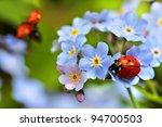 Ladybug  Ladybird On Forget Me...