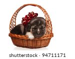 Cute puppy in a wicker basket on a white background - stock photo
