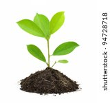 Young Green Plant And Soil...