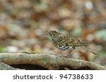 scaly thrush   Shutterstock . vector #94738633