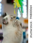 Stock photo a young cat playing 94800064
