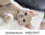 Stock photo adorable playful kitten 94815547
