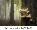 Mushrooms On A Tree In A Fores...