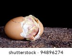 Baby chick hatching out of a brown egg - stock photo
