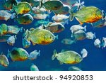 tropical piranha fishes in... | Shutterstock . vector #94920853