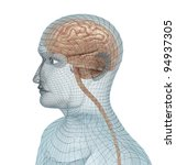 Human brain and body wire model - stock photo