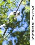 a lemur at isalo national park  ...   Shutterstock . vector #94979425