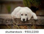 Stock photo puppy sadness 95012200