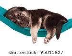 Stock photo cute sleeping puppy of weeks old in a hammock on a white background 95015827