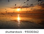 Many Seagull Flying At Sunset ...