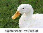 Duck In Garden