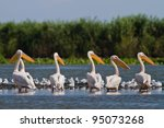 a group of pelicans in the... | Shutterstock . vector #95073268