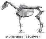 the skeleton of a horse.... | Shutterstock . vector #95089954