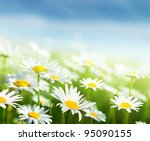field of daisy flowers | Shutterstock . vector #95090155