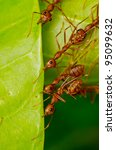 red ant team work building home - stock photo