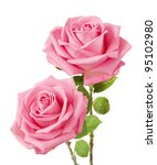 Stock photo bunch of rosy roses isolated on white 95102980