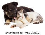 Stock photo puppy and cat 95122012