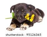 puppy holding flower | Shutterstock . vector #95126365