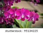 beautiful purple orchid | Shutterstock . vector #95134225
