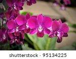 beautiful purple orchid   Shutterstock . vector #95134225