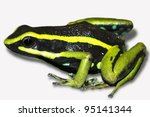Small photo of Three-striped Poison Dart Frog (Ameerega trivittata) in the Peruvian Amazon Cutout and Isolated with space for text