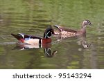 Mating Pair Of Wood Ducks In...