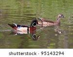 Mating Pair Of Wood Ducks In...