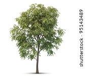 hi resolution beatiful tree.... | Shutterstock . vector #95143489