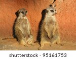 Two Meerkats Suricata