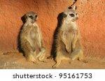 Two Meerkats Suricata