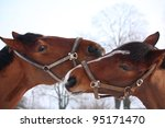 two brown horses nuzzling each... | Shutterstock . vector #95171470