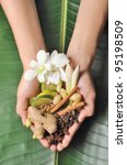 handful of herbs  spices and...   Shutterstock . vector #95198509