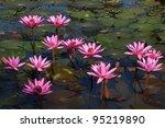 Asian Pink Lotus Flower