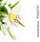 Lily Flower Isolated On A White ...