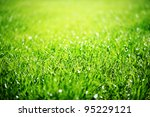 Close Up Of Green Grass With...