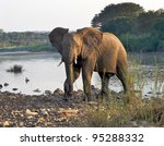 elephant crossing a river in...   Shutterstock . vector #95288332