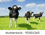 Three Cows On The Green Grass