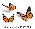 Three Orange Butterflies ...