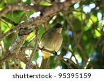 birds in nature   thailand | Shutterstock . vector #95395159