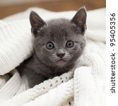 Stock photo cute kitten 95405356